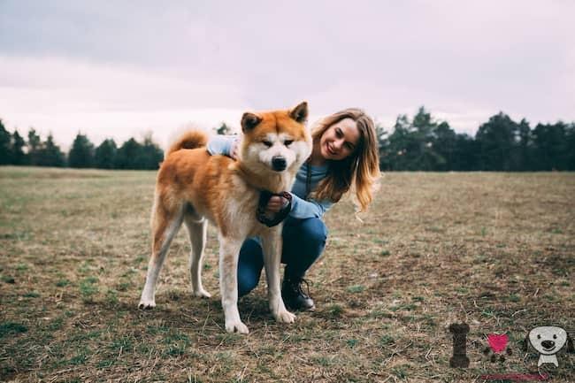 perro akita japonés con su dueña