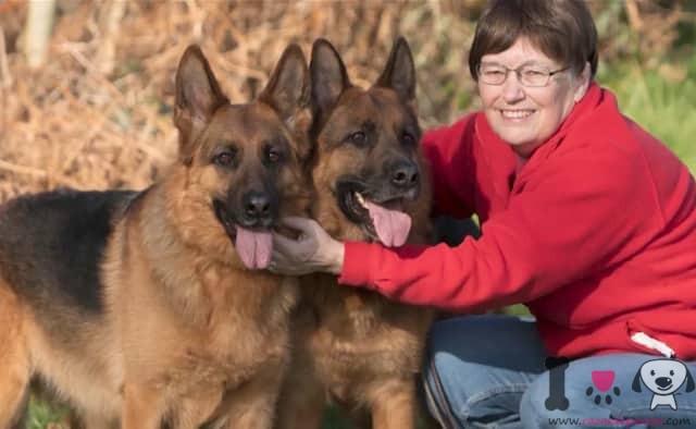 perros alemanes con su dueña