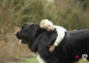 razas de perros gigantes