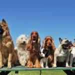 Las razas de perros más caros