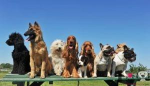 top 10 perros más caros del mundo